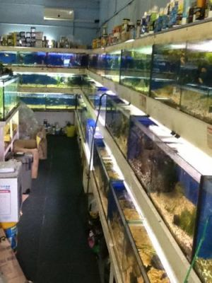 Clearwater Aquariums - Attractions Brisbane