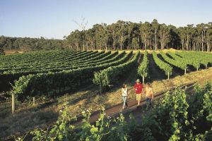 Margaret River Caves Wine and Cape Leeuwin Lighthouse Tour from Perth - Attractions Brisbane