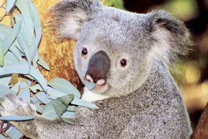 Perth Zoo General Entry Ticket and Sightseeing Cruise - Attractions Brisbane