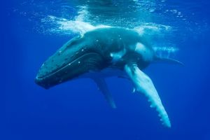 Dunsborough Whale Watching Eco Tour - Attractions Brisbane