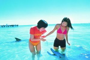 Monkey Mia Dolphins  Shark Bay Air Tour From Perth - Attractions Brisbane