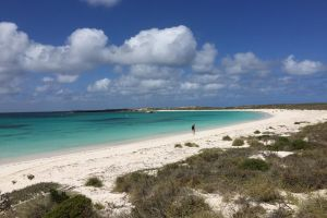 Abrolhos Island Half Day Fly and Flipper - Attractions Brisbane